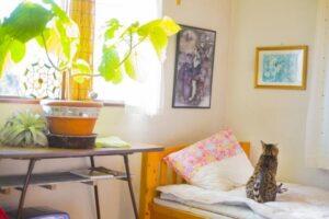 ベッドや植物のある部屋