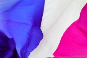 旗・布製の一部分のイメージ画像